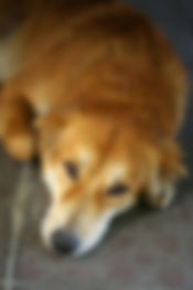 roundworm dog.jpg