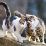 grant cats.jpg