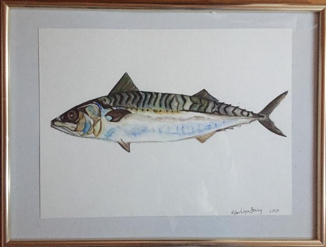 Schimmernde Makrelle