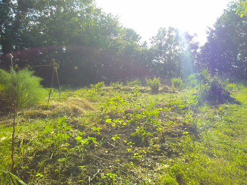 Le Boulay Farm Permaculture Squirrel Garden