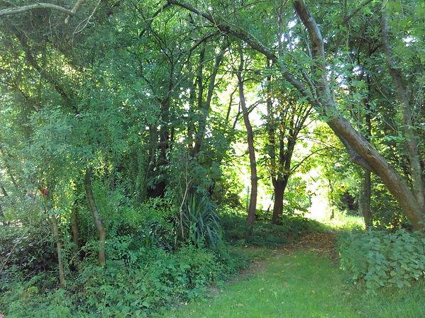 Le Boulay Trees
