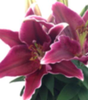 love story close up 2 ed.jpg