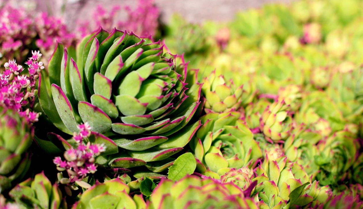 roosad lilled.jpg