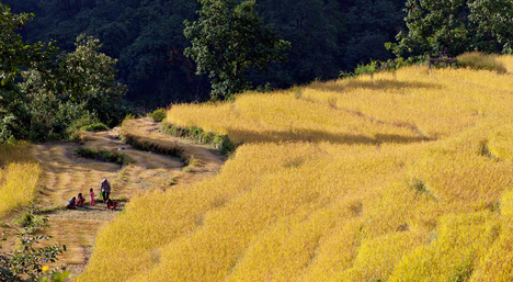 Photo tour Nepal November 2020_Crop_Fiel