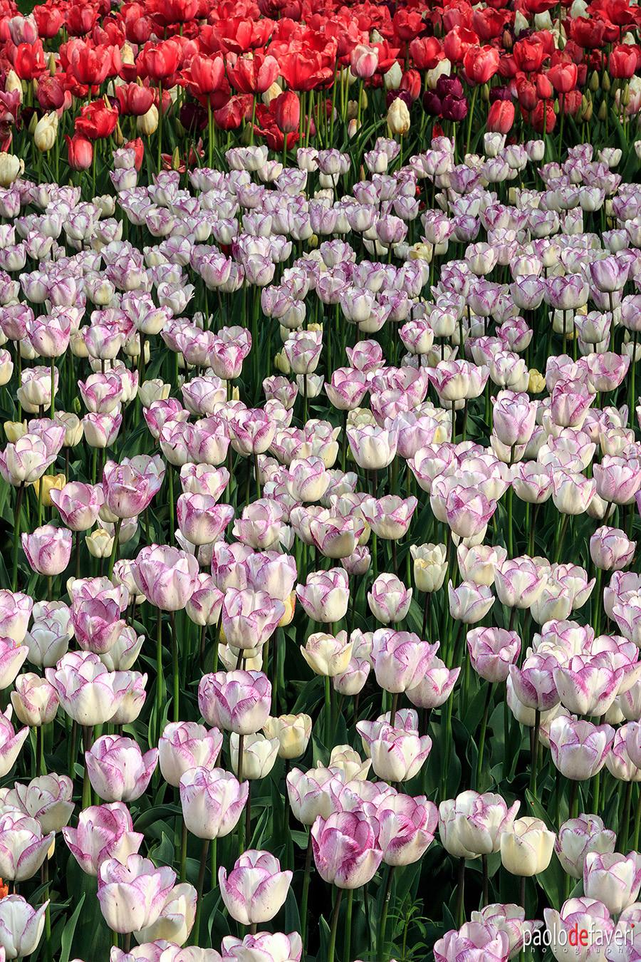 Pralormo Castle Turin Italy Messer Tulipano Tulip Flowers Exhibition spring 2019