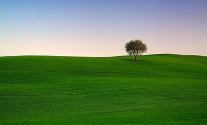 PDF_CTS053_Lone_tree_Montalcino_Sunset_O