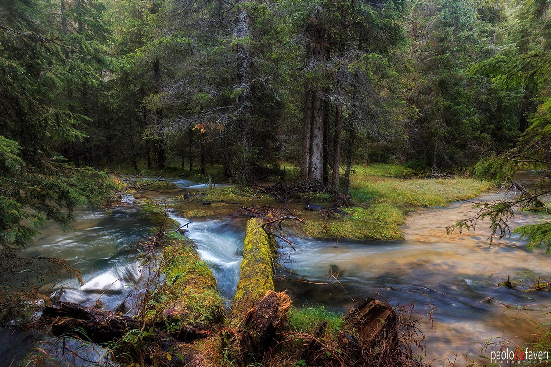Ru_Freddo_Rio_Stream_Forest_Misurina_Cor