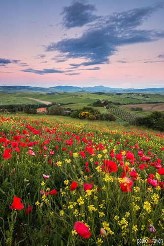 Sunset_Belvedere_Valdorcia_Tuscany_poppy_flowers