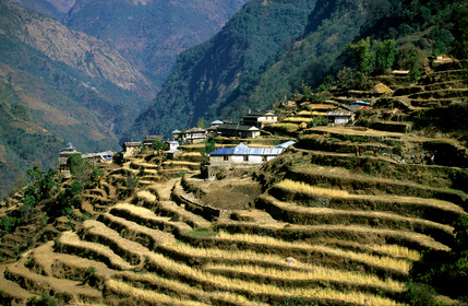 Photo tour Nepal November 2020_Rice_Fiel