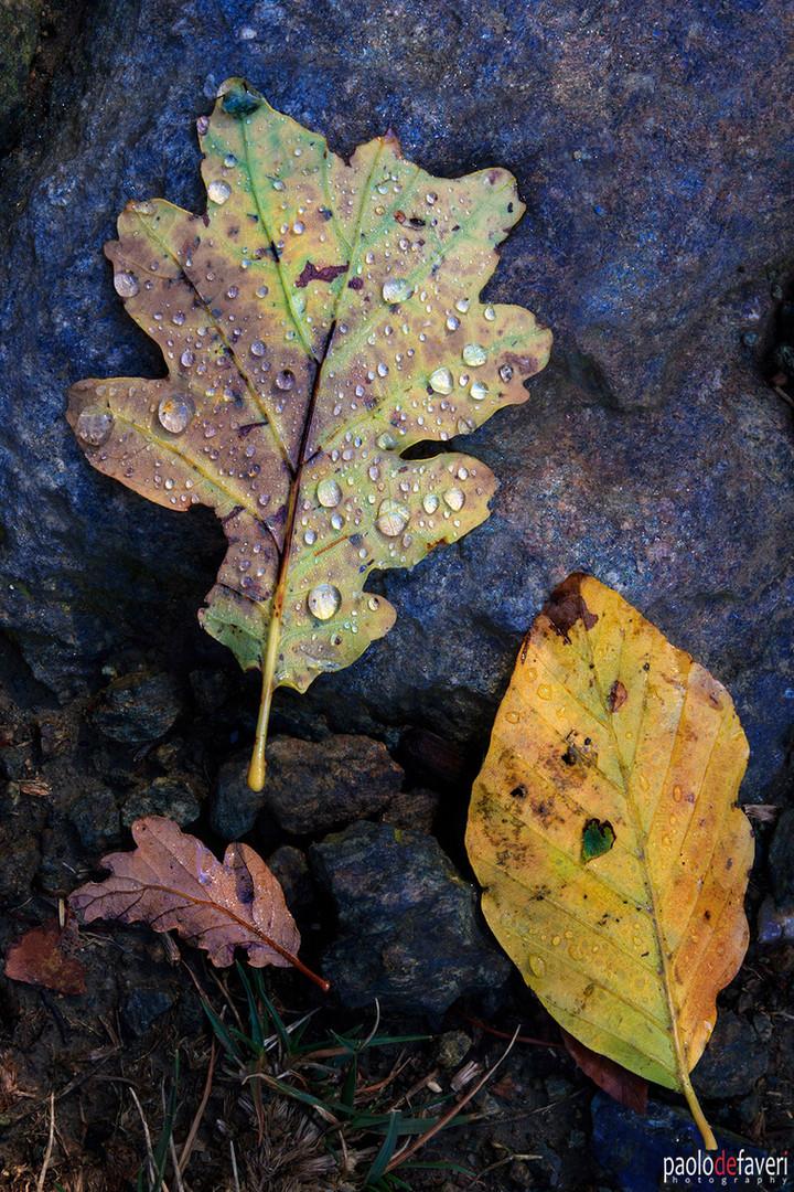 Autumn_Colors_Foliage_Leaves_Close_Up.jp