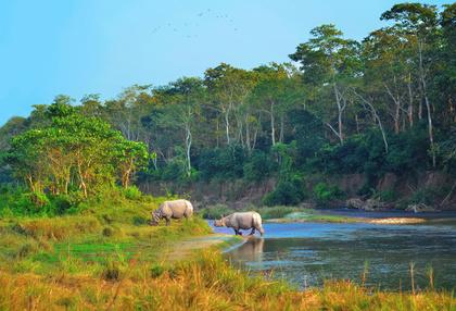 Photo tour Nepal November 2020_Rhinos