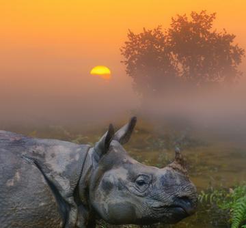 Photo tour Nepal November 2020_Rhino