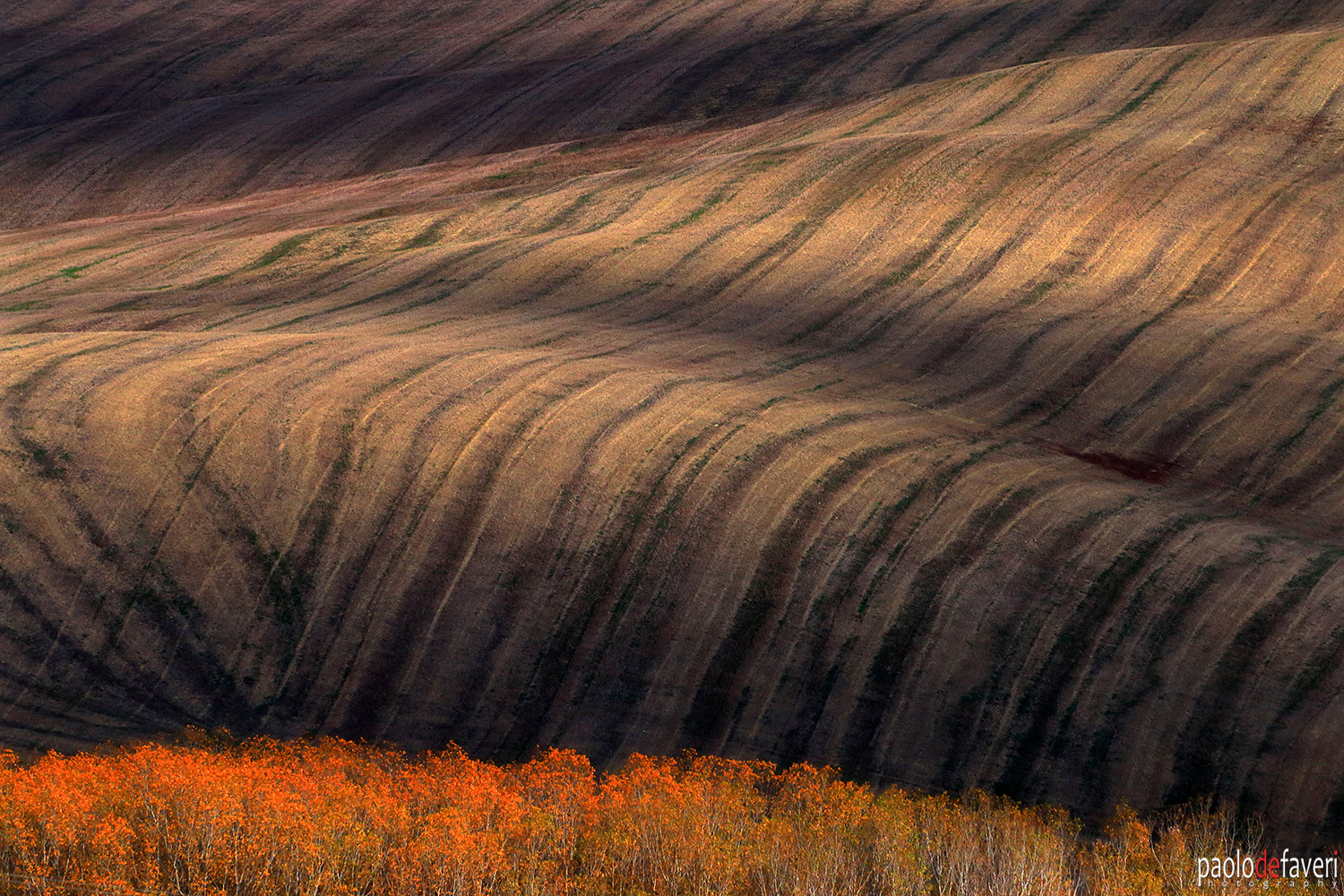 Belvedere_Valdorcia_Tuscany_plowed_fields