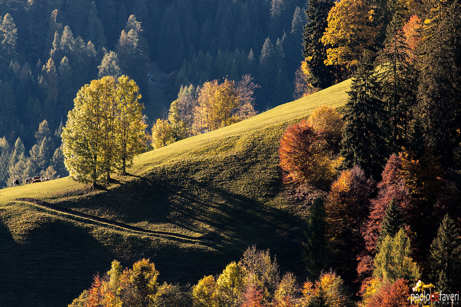 Selva_Cadore_Autumn_Fall_Foliage_Dolomit