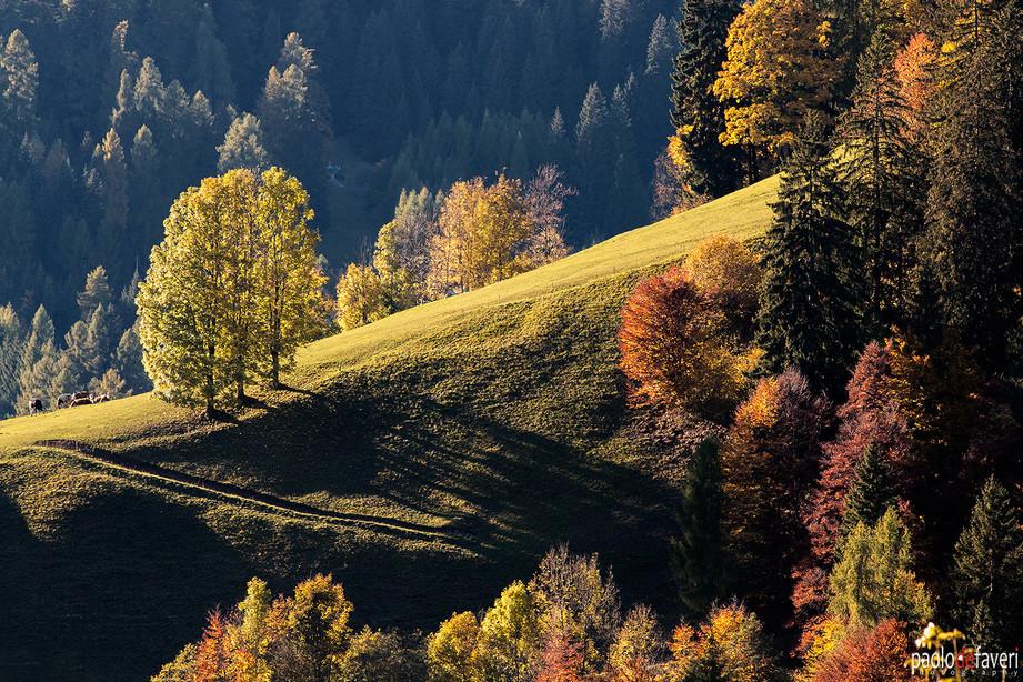 Selva_Cadore_Autumn_Fall_Foliage_Dolomit