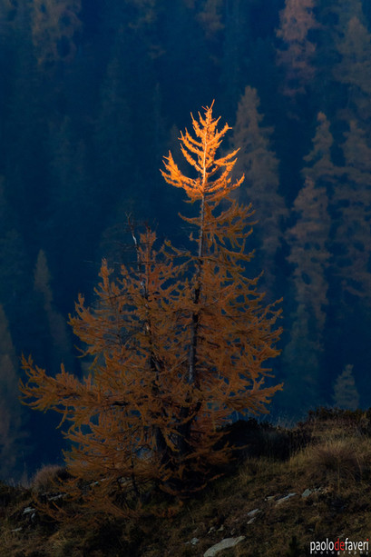 Sunset_Wood_Forest_Passo_Rolle_Pale_San_