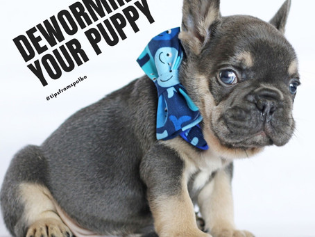 How to deworm your puppy