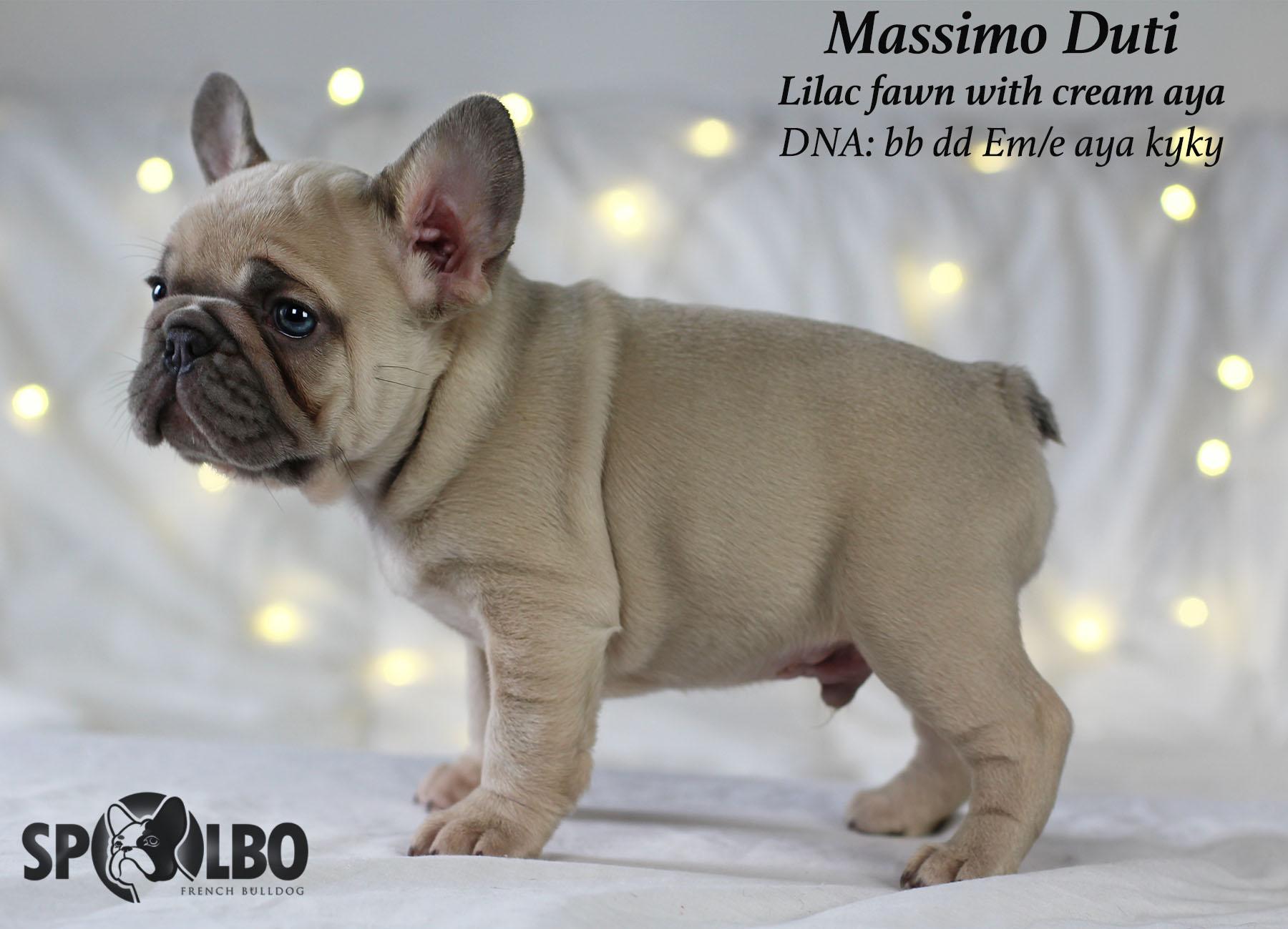 Massimo15