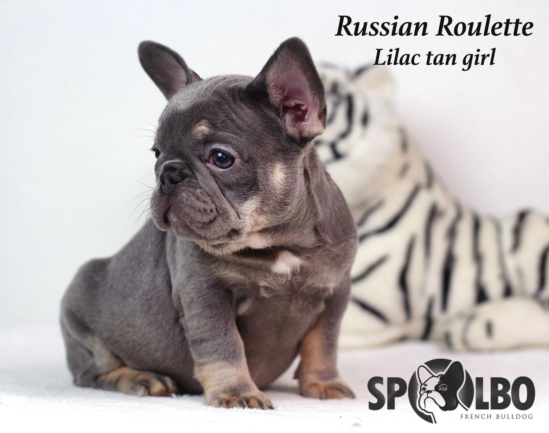 Russian rouletteWM