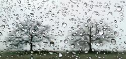 water tree.jpg