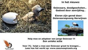 Eerste Ooievaar adoptie actie in Nederland !!