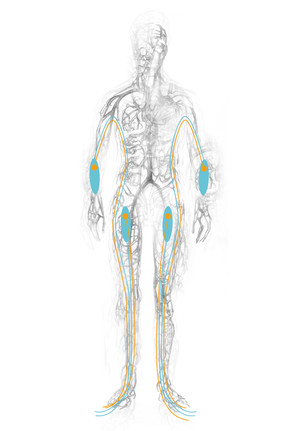 Body Suit 3 - Vein-Nerve System - Concept