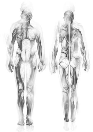 Body Suit 1 - Fat Zones - Concept - 1/3