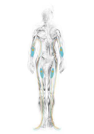 Body Suit 2 - Muscle Structure - Concept