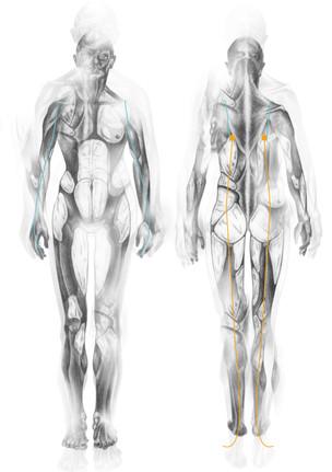 Body Suit 1 - Fat Zones - Concept