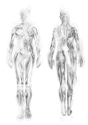 Body Suit 2 - Muscle Structures - Concept - 1/3