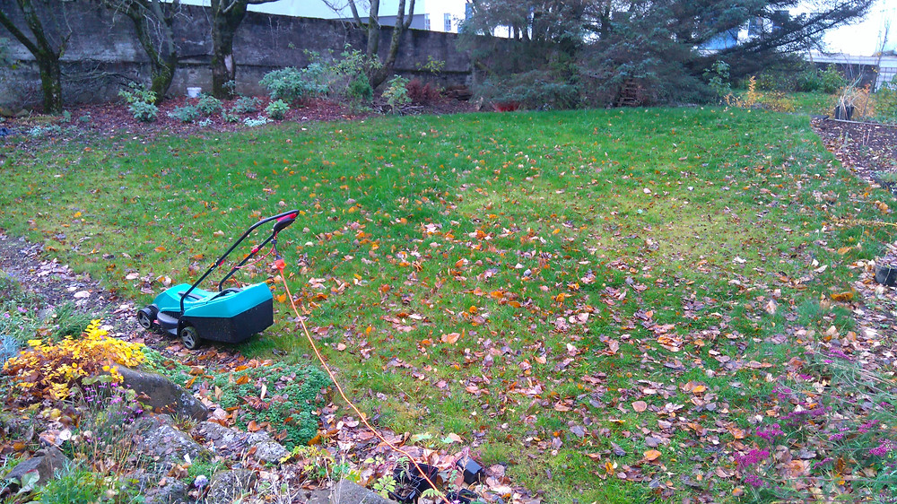 Autumn leaves collected from a lawn using a lawnmower.