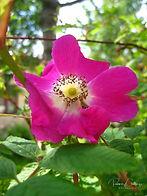 2005-07-17_6535_edit.jpg