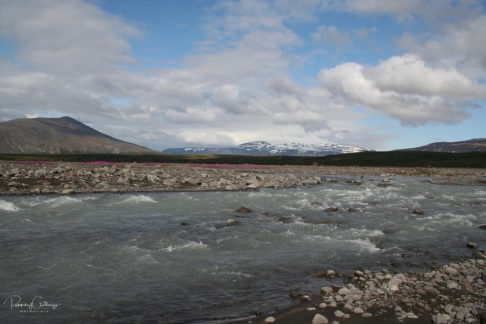 Chamaenerion latifolium, river beauty willowherb, dwarf fireweed, eyrarrós, Iceland flora, Iceland nature, glacial river, Eiríksjökull glacier