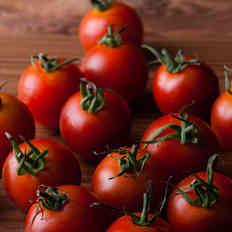 Melanzane Guru_Tomato_1.jpg