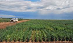 WSMV in Wheat