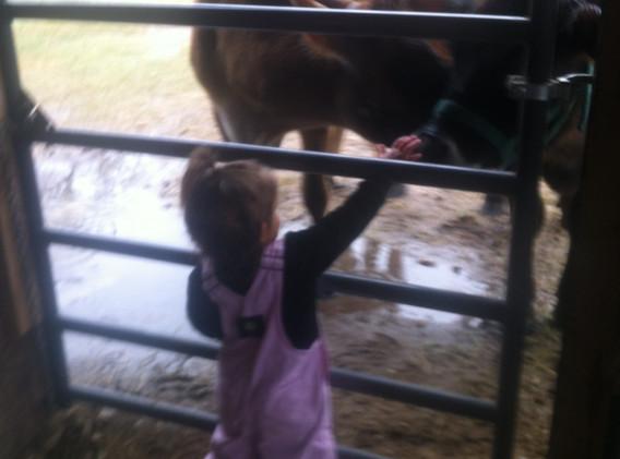 hello milk cows