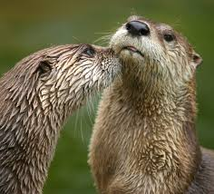 Otters