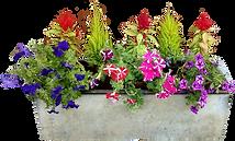 concrete-planter-flowers-no-background.p