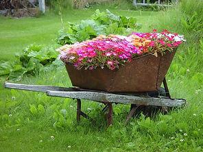 wheelbarrow flower.jpg