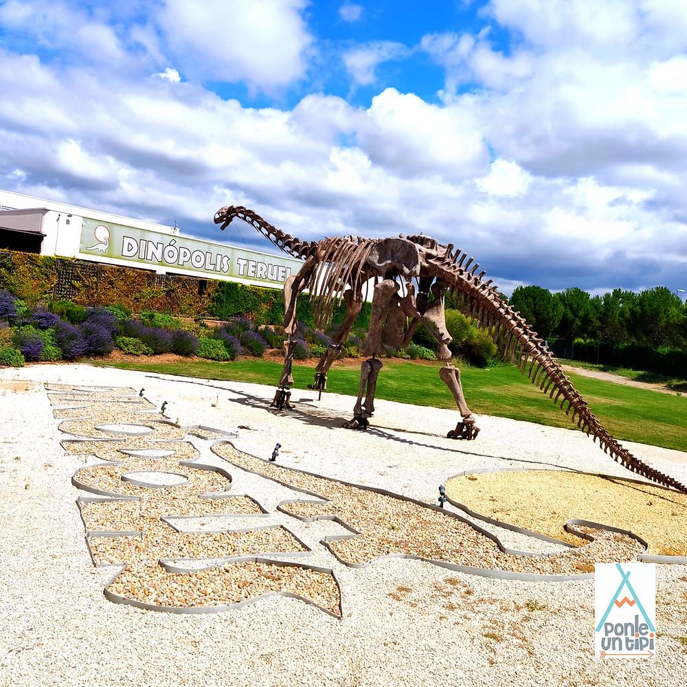 esqueleto dinosaurio fósiles