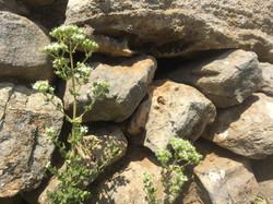 Stone & Herb