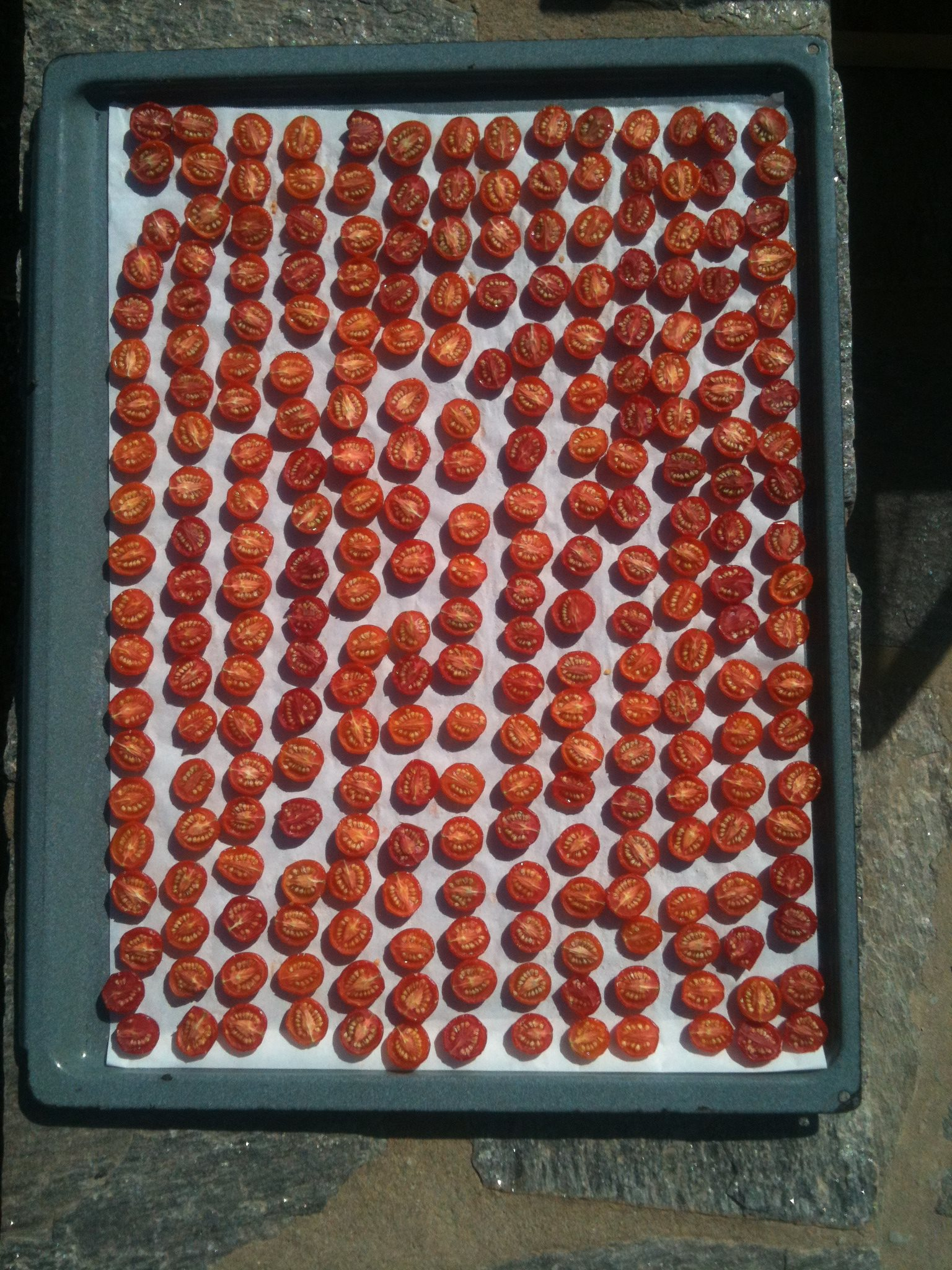 Sun Drying Baby Tomatoes