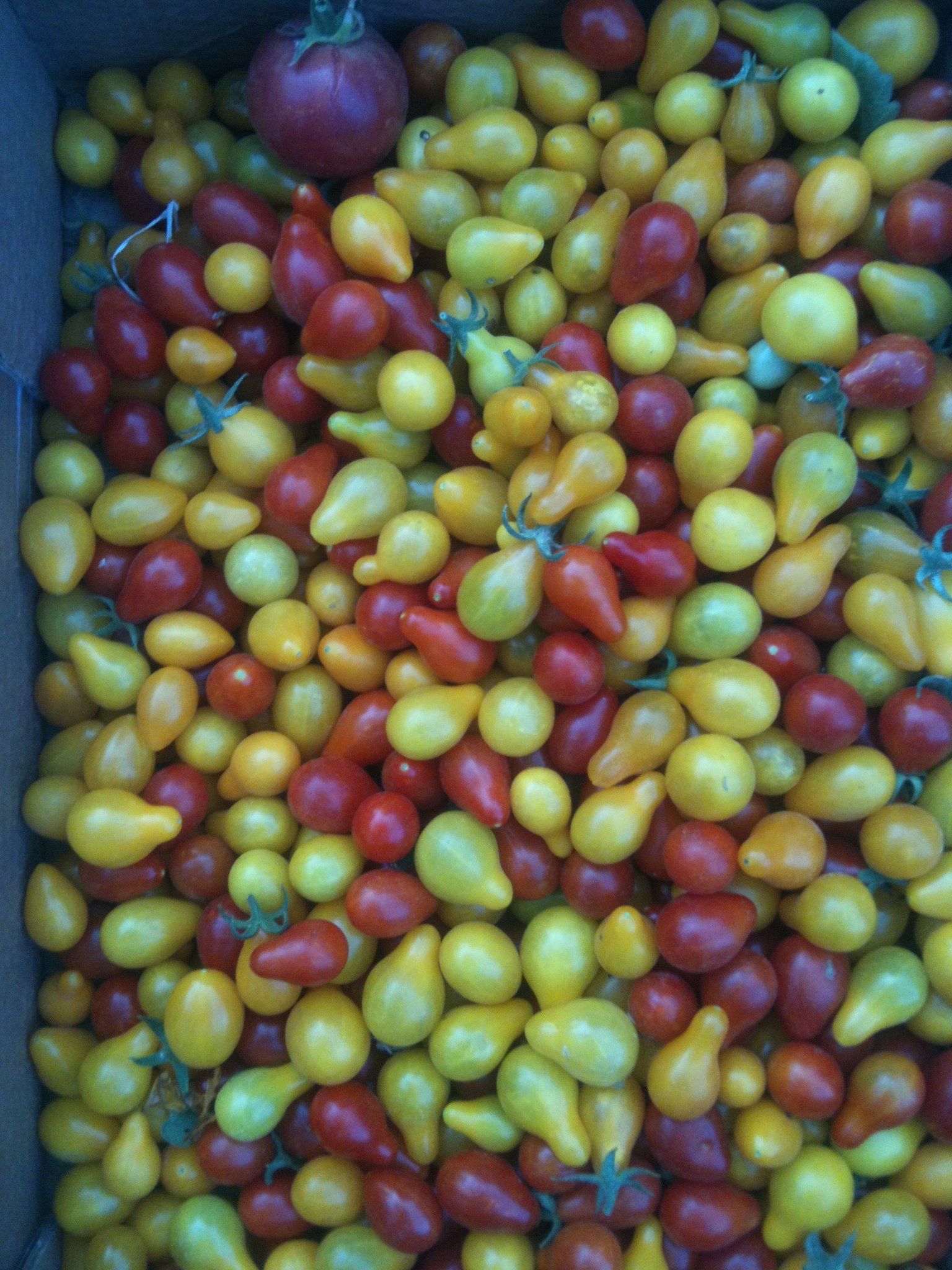 Baby Coloured Tomatoes