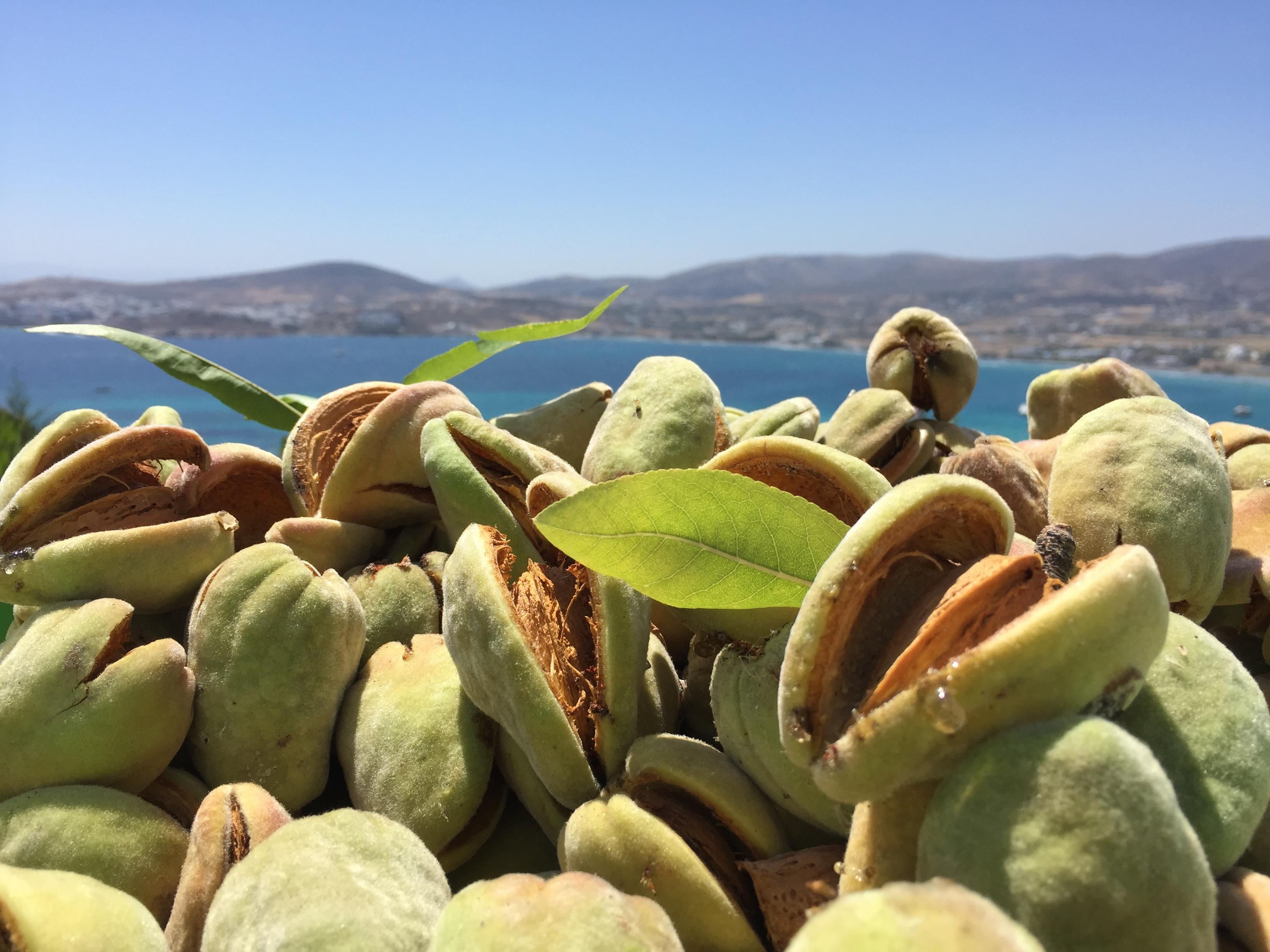 Almond View