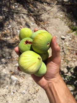 Hand Picked Figs