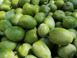 2019 Olive Harvest