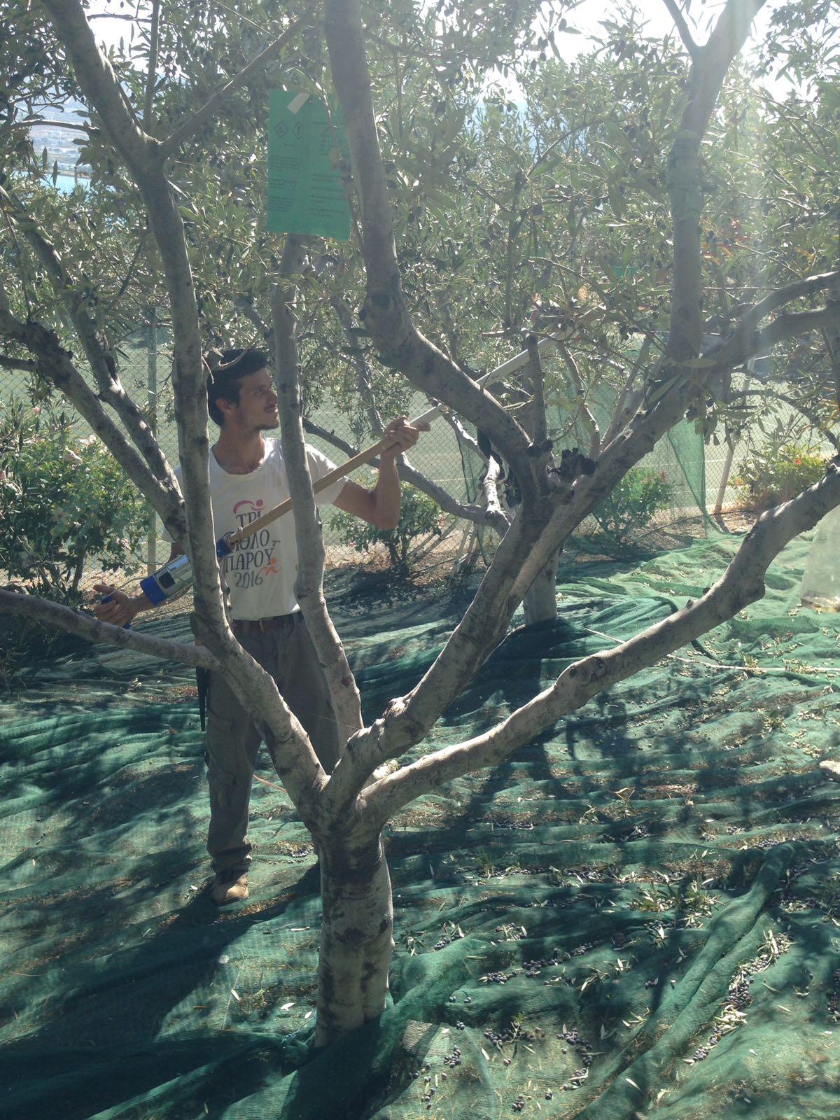 Combing Trees