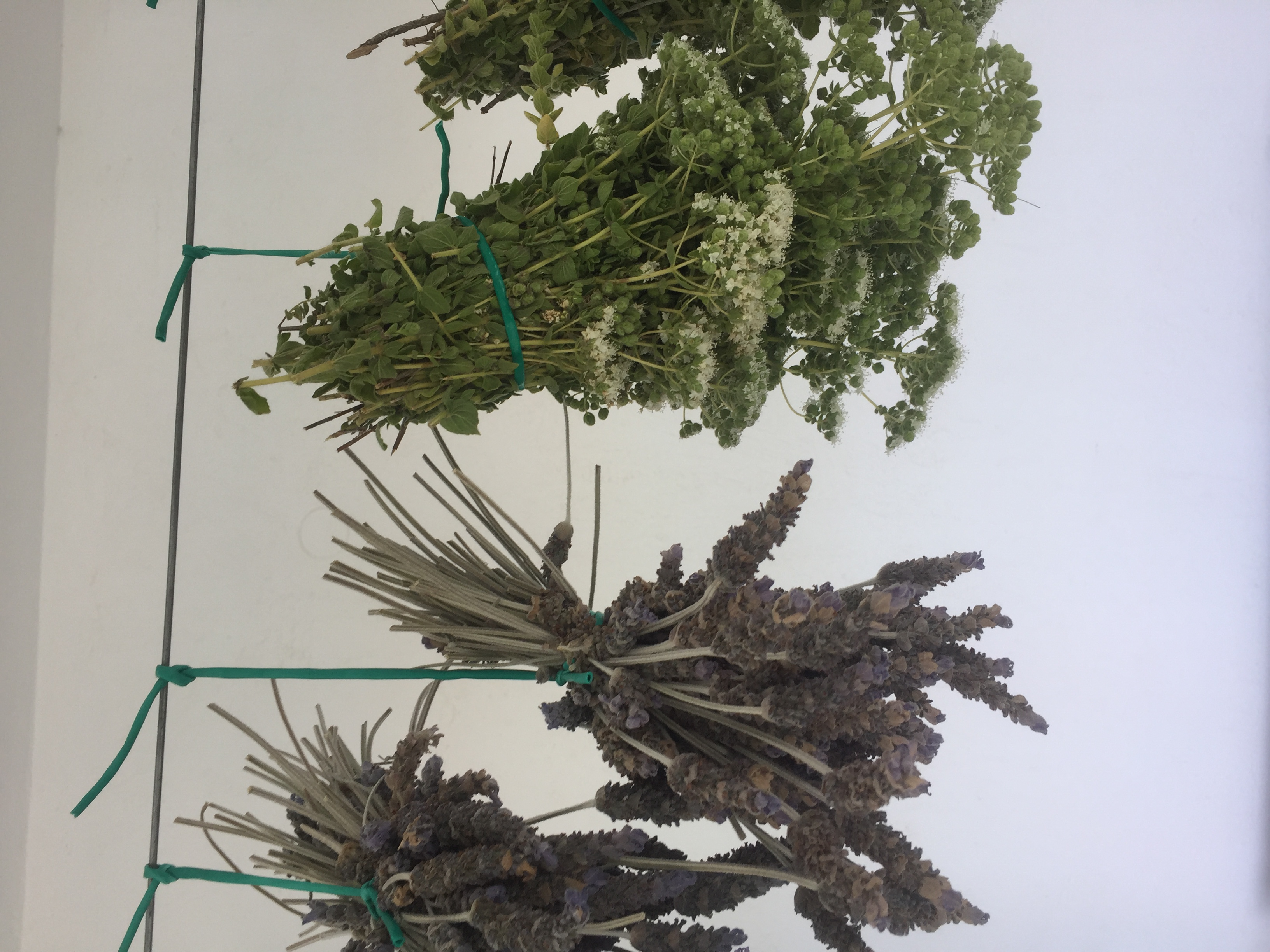 Herb Drying