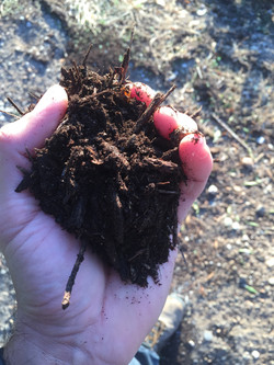 Our Compost