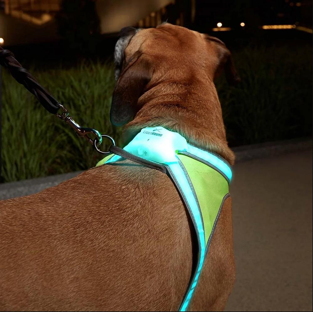 Noxgear Lighthound harness